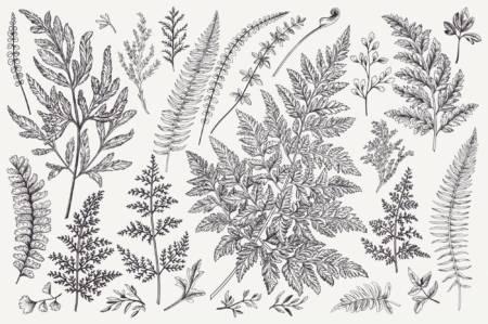 bild på olika arter från växtriket
