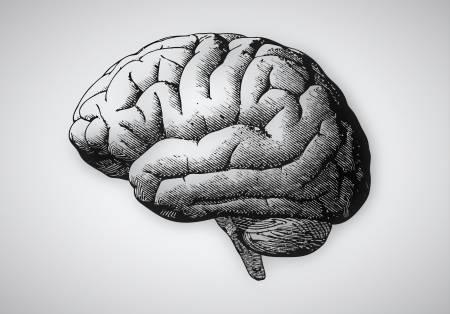 bild på en människohjärna