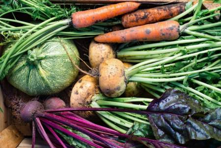 probiotika i mat, fermenterad mat