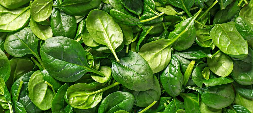 K vitamin och tarmfloran Super Synbiotics