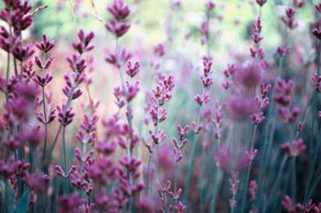 Tarmfloran påverkar dina hormoner