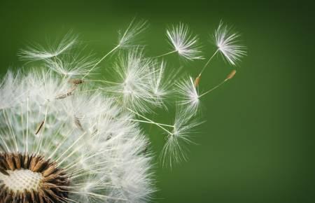 Tarmflora och allergi - Super Synbiotics